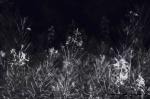 Abstract: Dark Dreams will heal