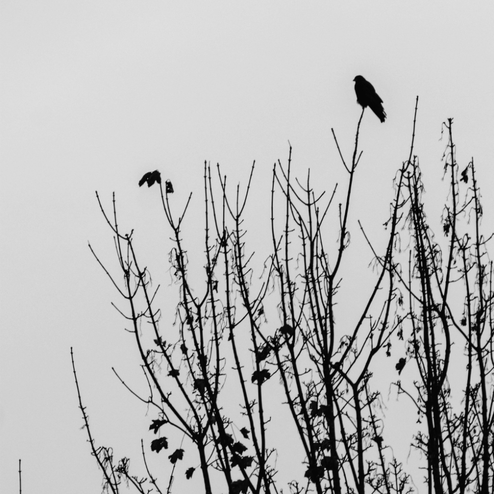 The barren trees with the harbinger of winter
