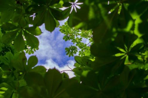 Canopy - Oxygen Flute