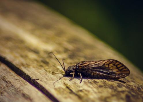 Rusty the Moth